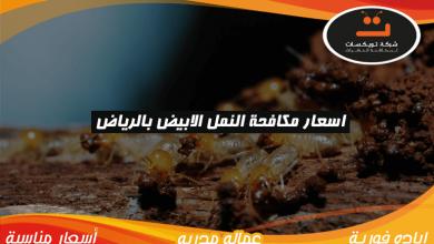 Photo of اسعار مكافحة النمل الابيض بالرياض