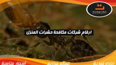 Photo of ارقام شركات مكافحة حشرات المنزل
