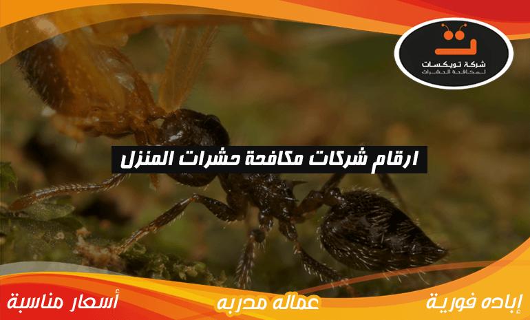 ارقام شركات مكافحة حشرات المنزل