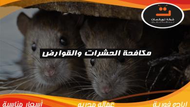 Photo of مكافحة الحشرات والقوارض