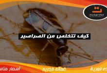 Photo of كيف تتخلص من الصراصير