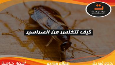 كيف تتخلص من الصراصير