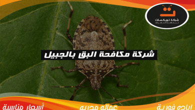 Photo of شركة مكافحة البق بالجبيل