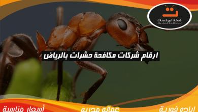 Photo of ارقام شركات مكافحة حشرات بالرياض