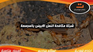 شركة مكافحه النمل الابيض بالمجمعة