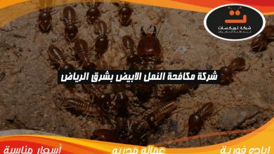 Photo of شركة مكافحه النمل الابيض بشرق الرياض
