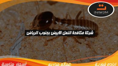Photo of شركة مكافحه النمل الابيض بجنوب الرياض