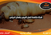 Photo of شركة مكافحه النمل الابيض بشمال الرياض