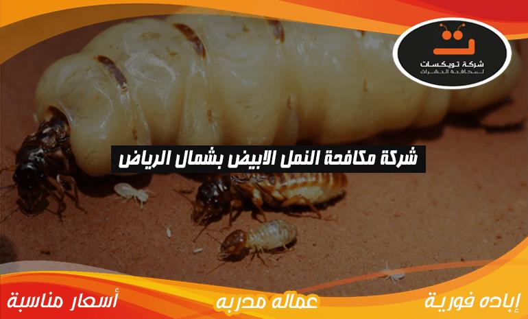 شركة مكافحه النمل الابيض بشمال الرياض