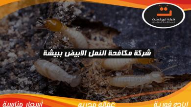 شركة مكافحه النمل الابيض ببيشة