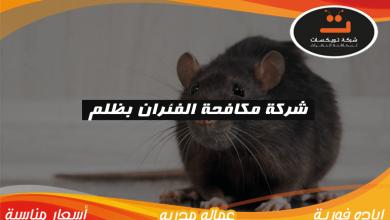 Photo of شركة مكافحه الفئران بظلم