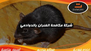شركة مكافحه الفئران بالدوادمي