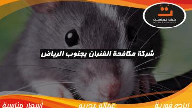 Photo of شركة مكافحه الفئران بجنوب الرياض