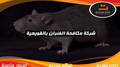 Photo of شركة مكافحه الفئران بالقويعية