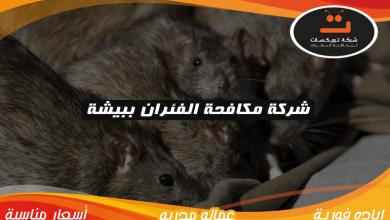 شركة مكافحه الفئران ببيشة