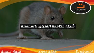 Photo of شركة مكافحه الفئران بالمجمعة