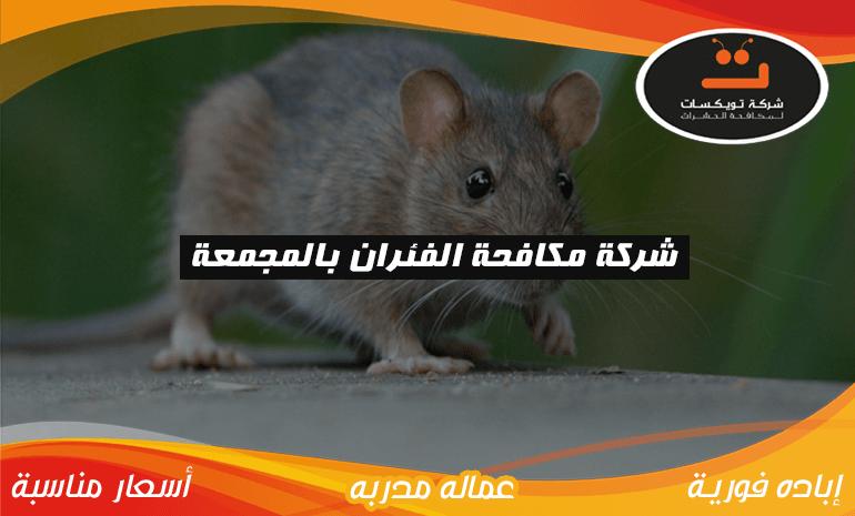 شركة مكافحه الفئران بالمجمعة