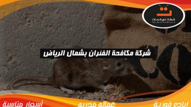 Photo of شركة مكافحه الفئران بشمال الرياض