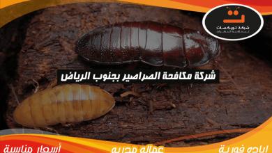 Photo of شركة مكافحه الصراصير بجنوب الرياض