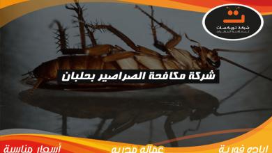 Photo of شركة مكافحه الصراصير بحلبان