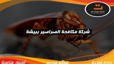 Photo of شركة مكافحه الصراصير ببيشة