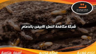 Photo of شركة مكافحة النمل الابيض بالدمام