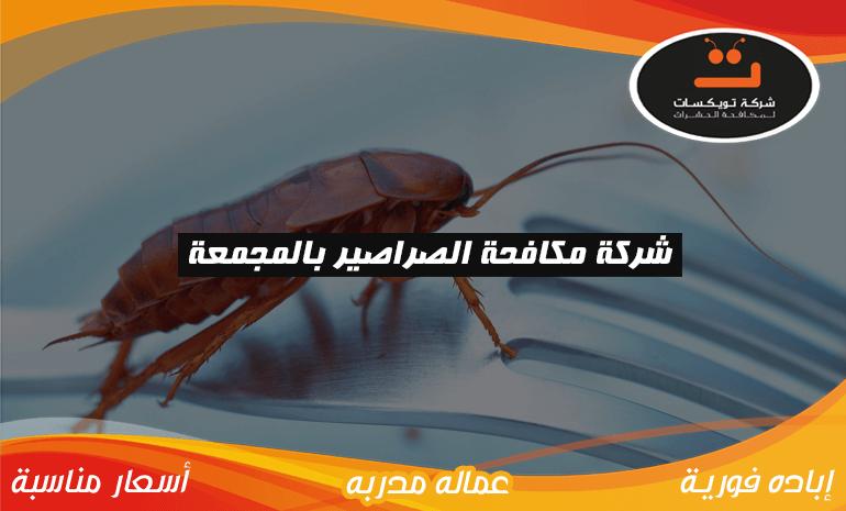 شركة مكافحه الصراصير بالمجمعة