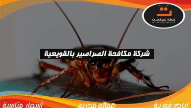 Photo of شركة مكافحه الصراصير بالقويعية