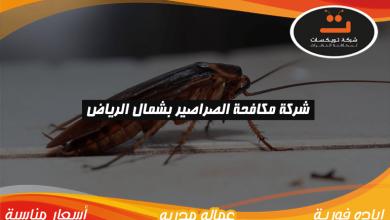 Photo of شركة مكافحه الصراصير بشمال الرياض
