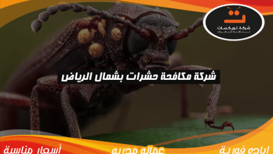 Photo of شركة مكافحه حشرات بشمال الرياض