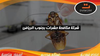 Photo of شركة مكافحه حشرات بجنوب الرياض