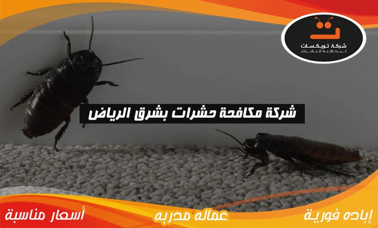 شركة مكافحه حشرات بشرق الرياض