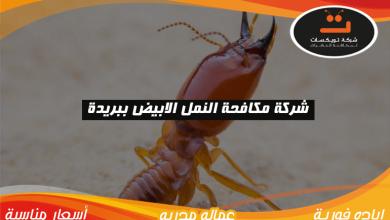 Photo of شركة مكافحة النمل الابيض ببريدة