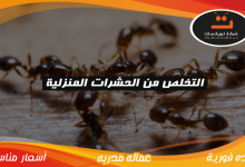 Photo of التخلص من الحشرات المنزلية
