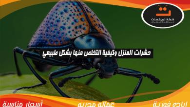 Photo of حشرات المنزل و كيفية التخلص منها بشكل طبيعي
