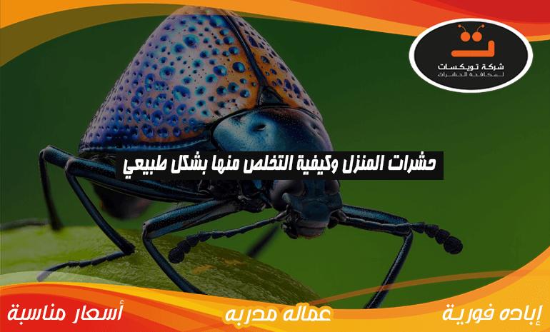 حشرات المنزل و كيفية التخلص منها بشكل طبيعي