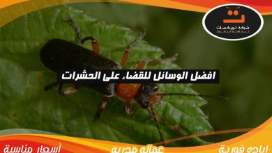 Photo of افضل الوسائل للقضاء على الحشرات