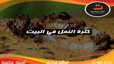 Photo of كثرة النمل في البيت