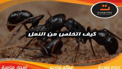 Photo of كيف اتخلص من النمل