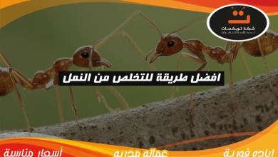 Photo of افضل طريقة للتخلص من النمل