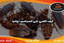 Photo of كيف اقضي على الصراصير نهائيا