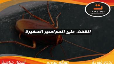 Photo of القضاء على الصراصير الصغيرة