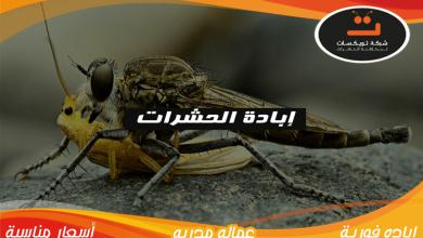 Photo of ابادة حشرات