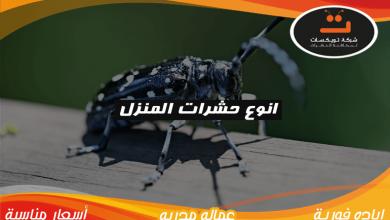 Photo of انواع حشرات المنزل