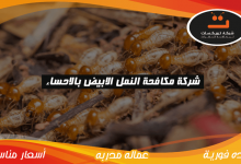Photo of شركة مكافحة النمل الابيض بالاحساء