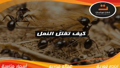 Photo of كيف تقتل النمل