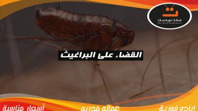 Photo of القضاء على البراغيث