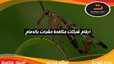 Photo of ارقام شركات مكافحة حشرات بالدمام