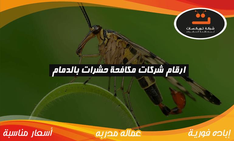 ارقام شركات مكافحة حشرات بالدمام