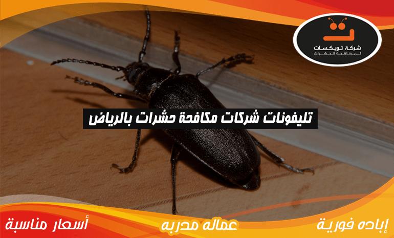 تليفونات شركات مكافحة حشرات بالرياض